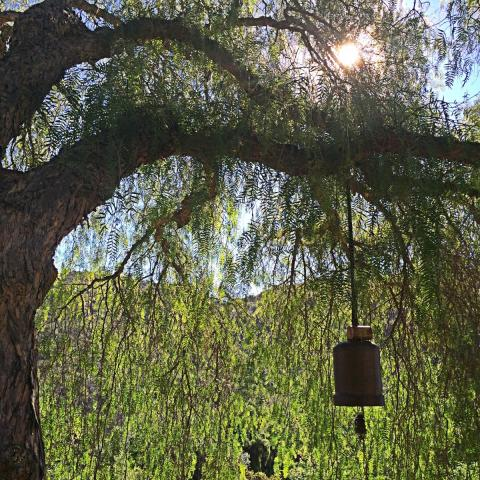 Tree and Bell at Deer Park Monastery