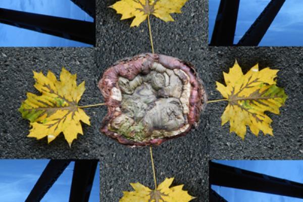 Leaf Mandala, by Caryl Henry Alexander